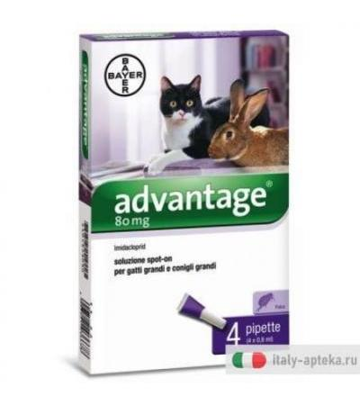 Advantage Spot On 4 Pipette 0,8ml Antiparassitario Gatti/Conigli Grandi